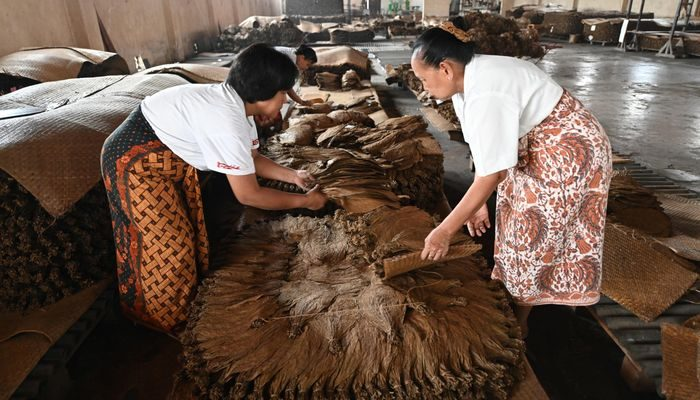 perkebunan tembakau sumatera timur