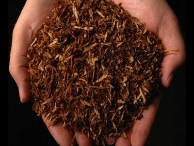 tembakau dalam genggaman