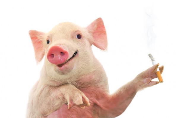 filter rokok darah babi